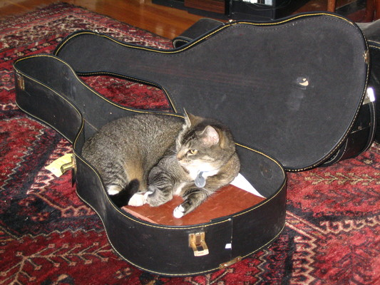 Paws in a guitar case 1