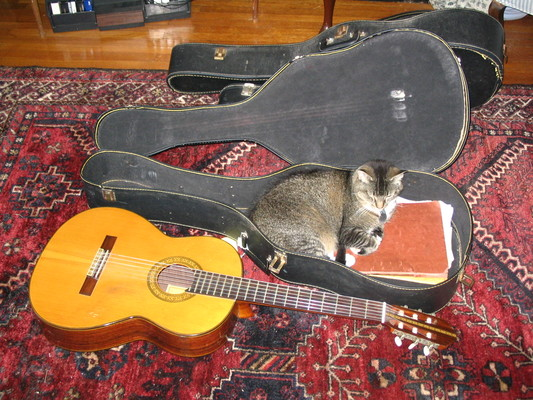 Paws in a guitar case 2