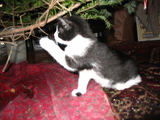 Kitten playing with tree